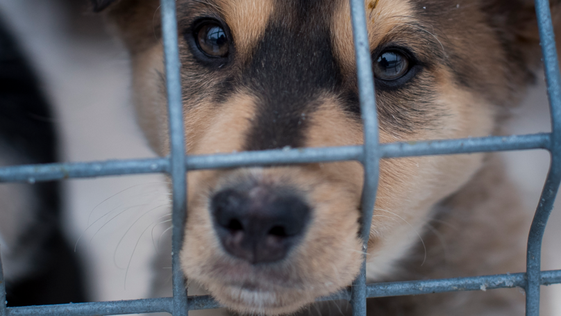 Eating Dogs Could Be Made Illegal In The UK With New Brexit Bill