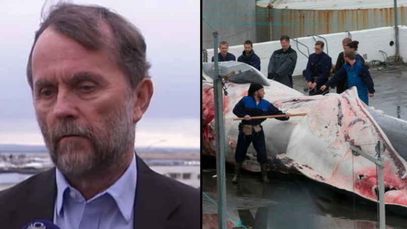 Millionaire Responsible For Killing Rare Blue Whale Hybrid 'Vows To Kill 150 More'