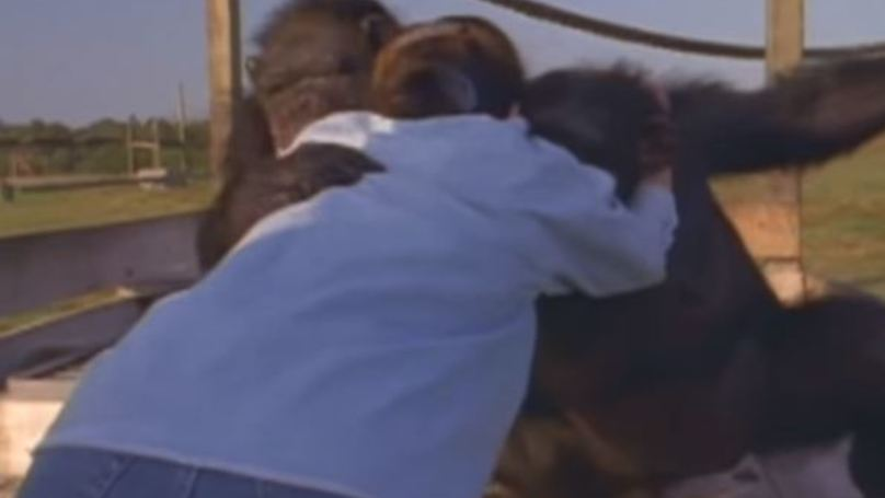WATCH: Chimp Smiles And Hugs The Woman Who Saved Her From A Research Lab 25 Years Ago