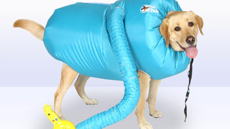 ​You Can Now Buy A Special Drying Coat For Your Dog