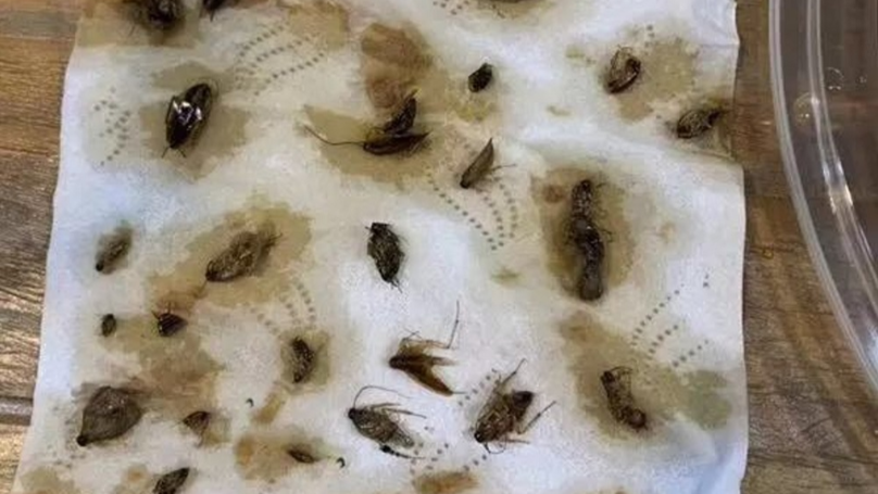 Woman Finds More Than 40 Dead Cockroaches In Takeaway Meal