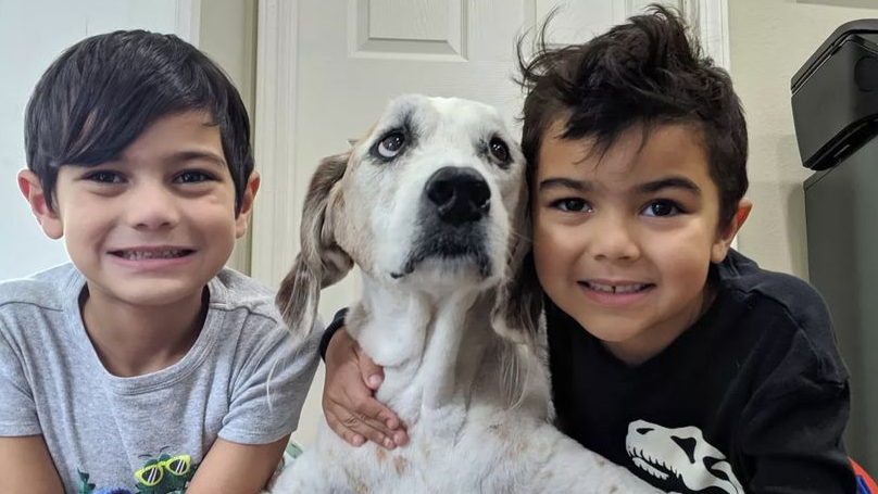 Family Treat Terminally Ill Dog To Dream Weekend Before He Dies