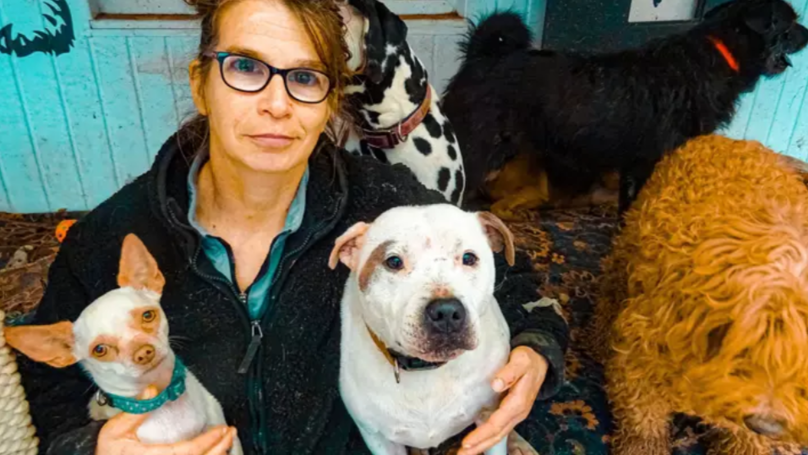 Woman With 106 Dogs Has Bankrupted Herself