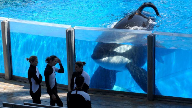 Killer Whale Tilikum From 'Blackfish' Dead At 36