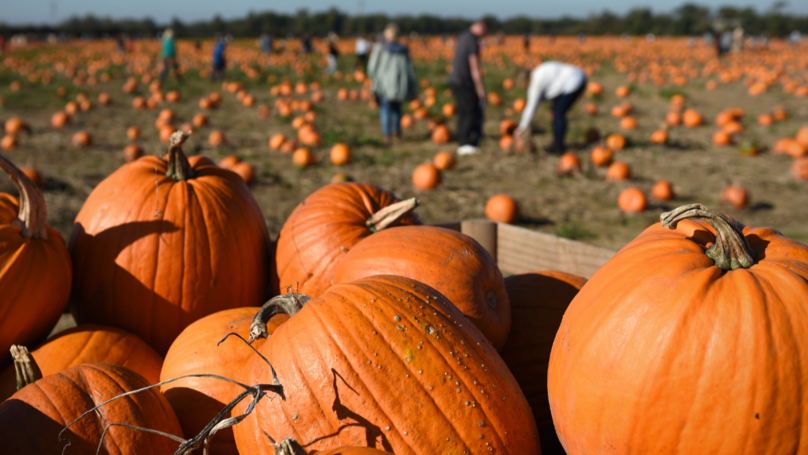 ​The UK Will Bin 8 Million Pumpkins This Halloween, According To Research