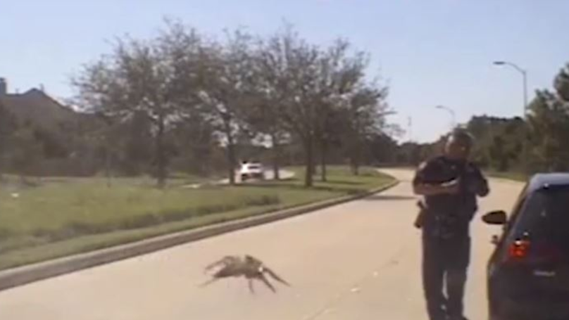 This Video Of A 'Gigantic' Spider Hunting A Cop Has Left The Internet Baffled