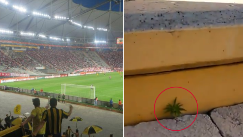 Footage Shows Cannabis Growing Inside Penarol's Football Stadium In Uruguay