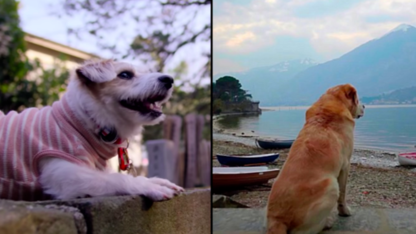 Netflix Has Finally Released New Series 'Dogs' And It Looks Incredible