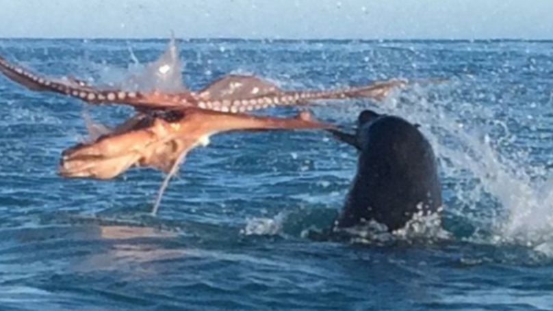 Epic Fight To The Death Between Huge Octopus And Giant Seal  | LADbible
