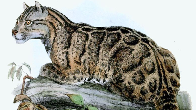 Leopard Species Thought To Have Disappeared In The 80s Has Been Spotted Alive