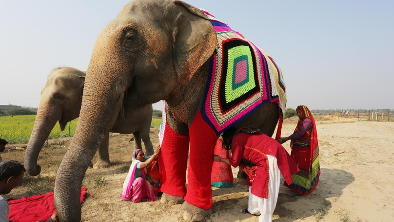 ​Indian Villagers Knit Super-Size Pyjamas For Cold Elephants