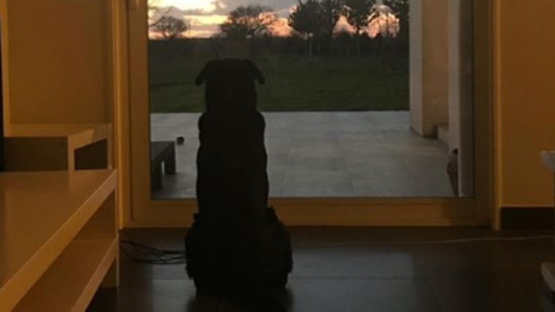 Emiliano Sala's Sister Posts Picture Of His Dog Waiting For Him To Return Home