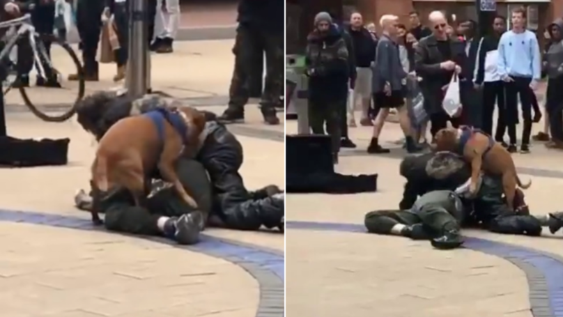 A Frisky Dog Starts Humping Man's Leg During Street Fight
