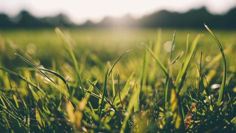 It's So Hot In The UK It's Raining Grass - Sort Of