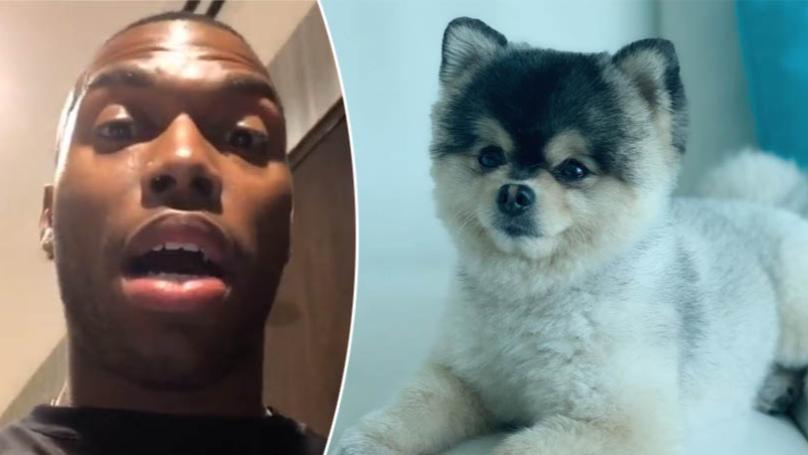 Former Liverpool Striker Daniel Sturridge Offers £30,000 For Return Of His Stolen Pomeranian Dog Lucci