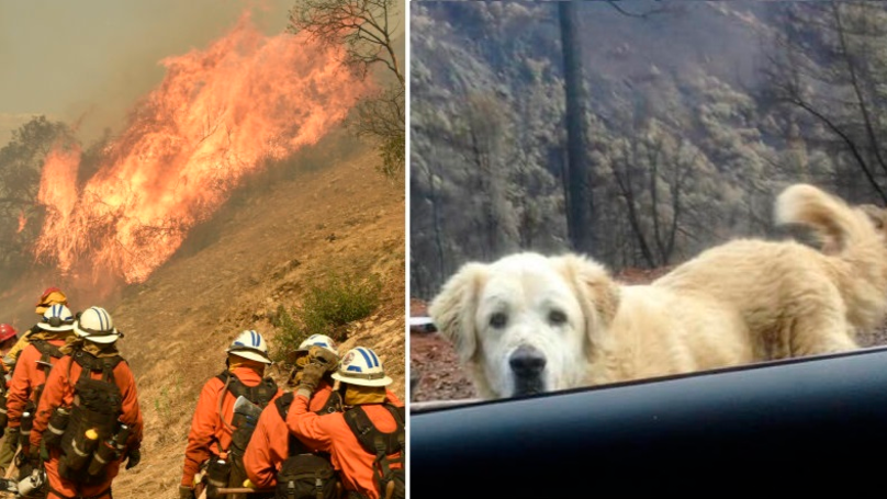 Family Who Evacuated During California Wildfires Find Pet Dog Waiting For Them On Their Return