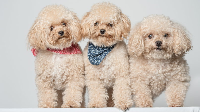Woman Who Spent $50,000 Cloning Her Dog Says She Will Do It Again