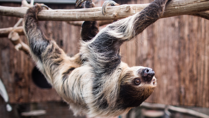 A Sloth Retirement Home Has Been Set Up In The UK