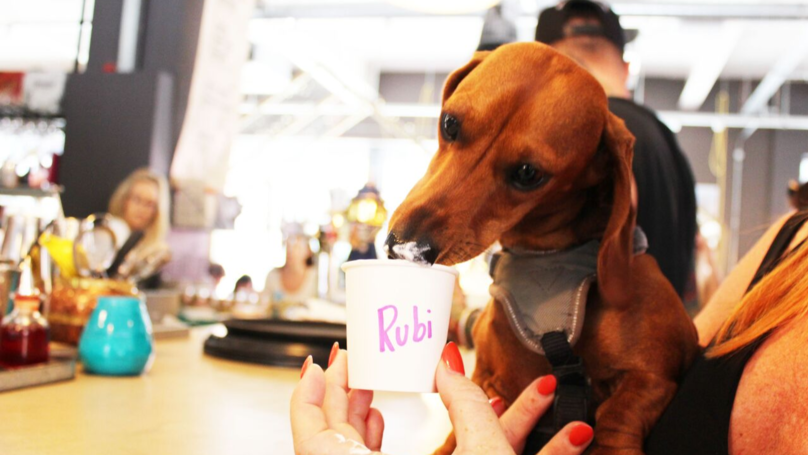 London's Getting It's First Dachshund Café
