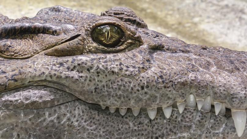 Crocodile Kills Pastor While He Baptises Followers Near Lake In Ethiopia