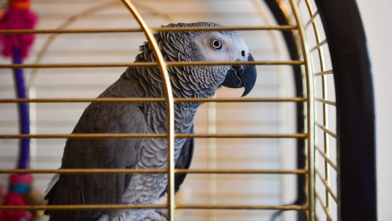 Firefighters Make Emergency Visit To Household After Parrot Was Confused With A Smoke Alarm
