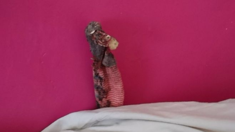 RSPCA Called Out To Rescue A Lizard, Only To Find It's A Sock