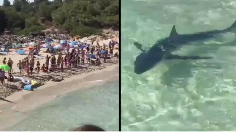 Mallorca Beach Forced To Close As 10ft Shark Sends Tourists Running From The Sea