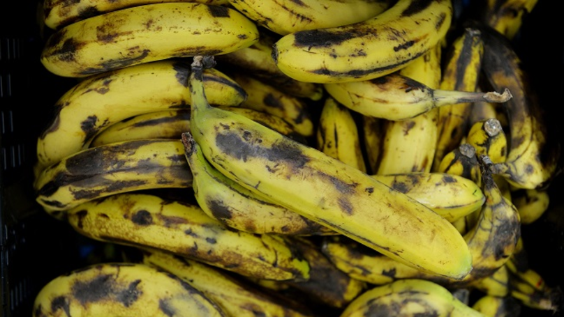 Scientists Are Working To Stop Tropical Disease Putting Bananas On The Brink Of Extinction
