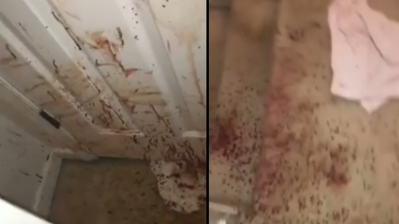 Would-Be Thief Sprays House In Blood After Being Attacked By Family Dog