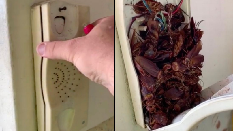 Man Discovers Dozens Of Dead Cockroaches In A Landline
