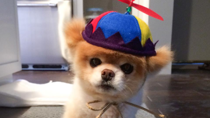 Boo The 'World's Cutest Dog' Has Passed Away