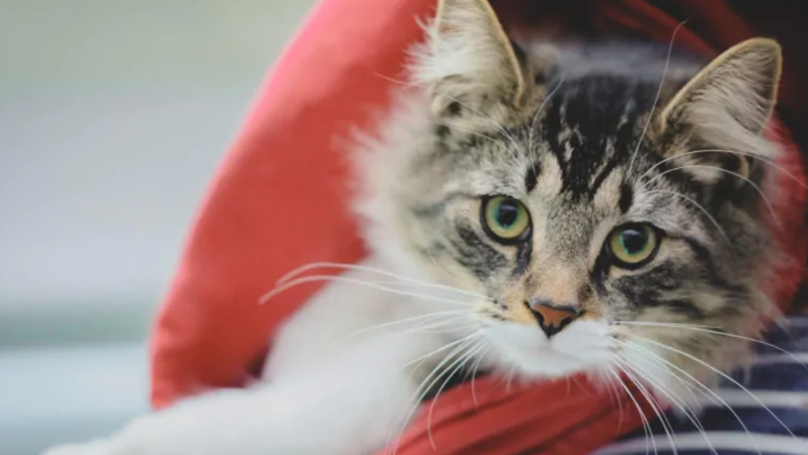 Cat Reunited With Family After Accidentally Being Shipped Across Canada