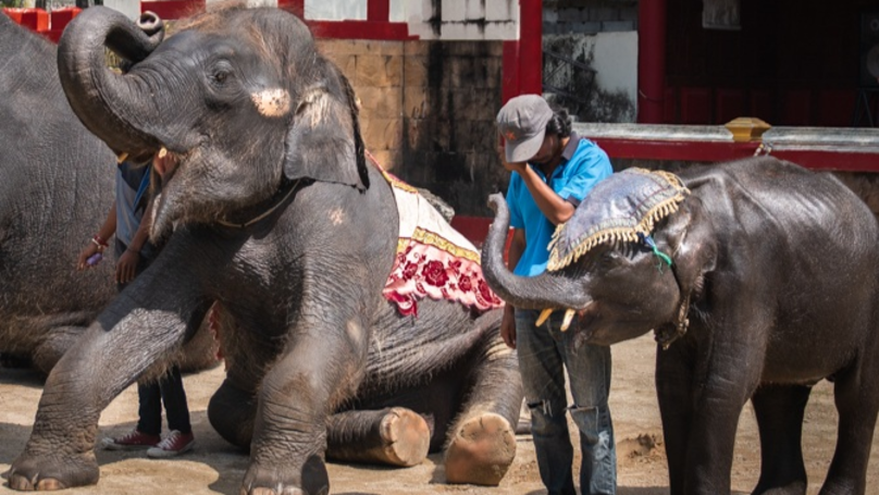 'Real-Life Dumbo' Forced To Dance To Rave Music In Thai Zoo