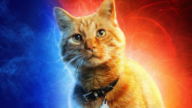 People Are Saying Captain Marvel's Cat Goose Needs Its Own Spin Off
