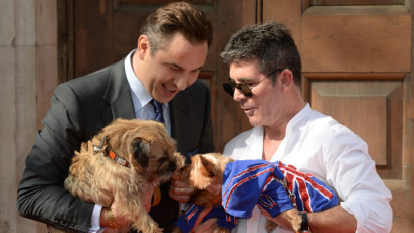 Survey Reveals Britain's Top 10 Favourite Dog Breeds