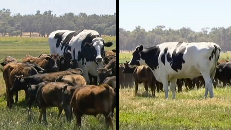 'The World's Largest Cow' Is Neither A Cow, Nor Particularly Large