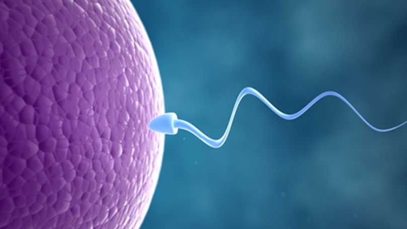 Plummeting Sperm Count 'May Lead To Human Extinction'