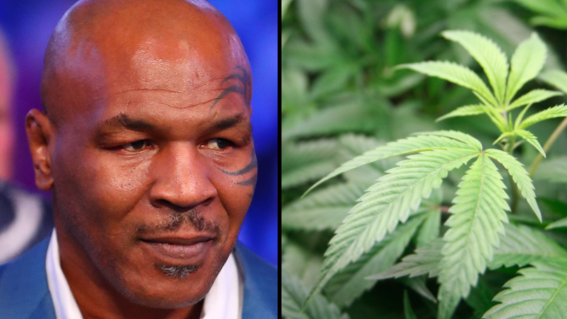 Mike Tyson Has Broken Ground On His Giant Cannabis Ranch In California