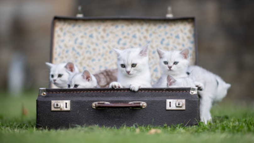 New TV Show Looking For Crazy Cats And Their Owners To Take Part