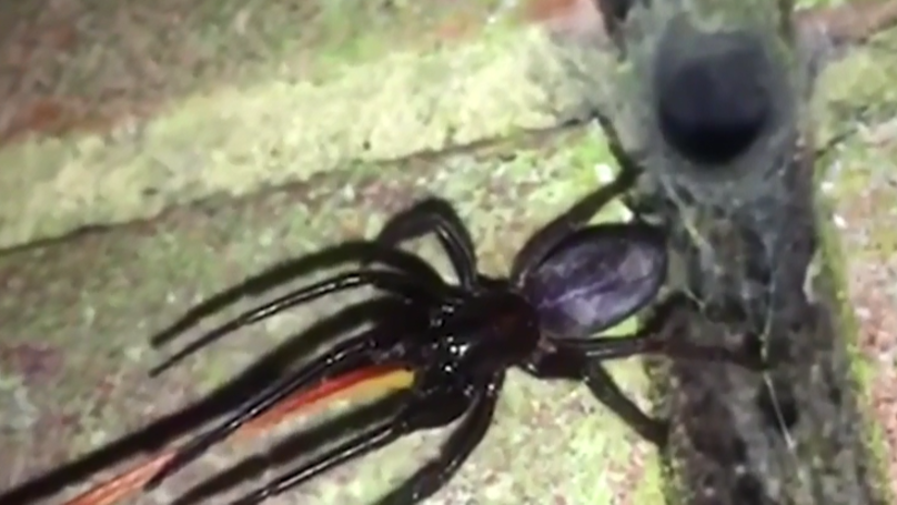 Man Finds Joy In Seeing Hundreds Of Terrifying Spiders Around His Home