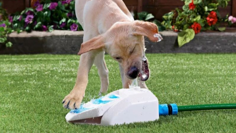 B&M Is Selling Water Fountains For Dogs They Can Use On Their Own