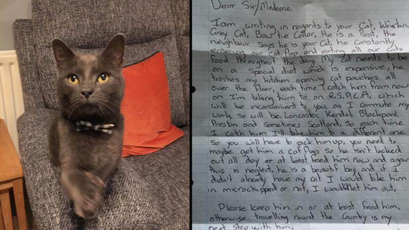 人的邻居叶奇怪注意威胁要绑架的猫,因为它使偷窃食物