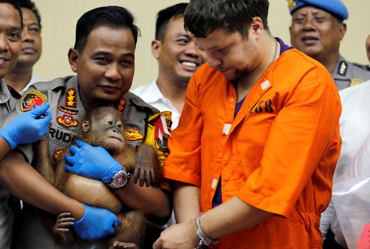 Denpasar police chief Ruddi Setiawan, center left, holds the orangutan beside Andrei Zhestkov, centre right. Credit: PA
