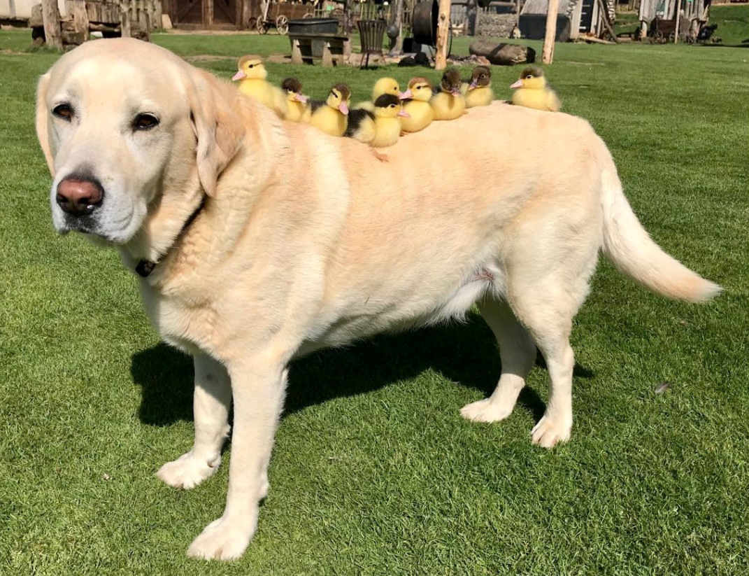 Fred the dog and his new pals. Credit: SWNS