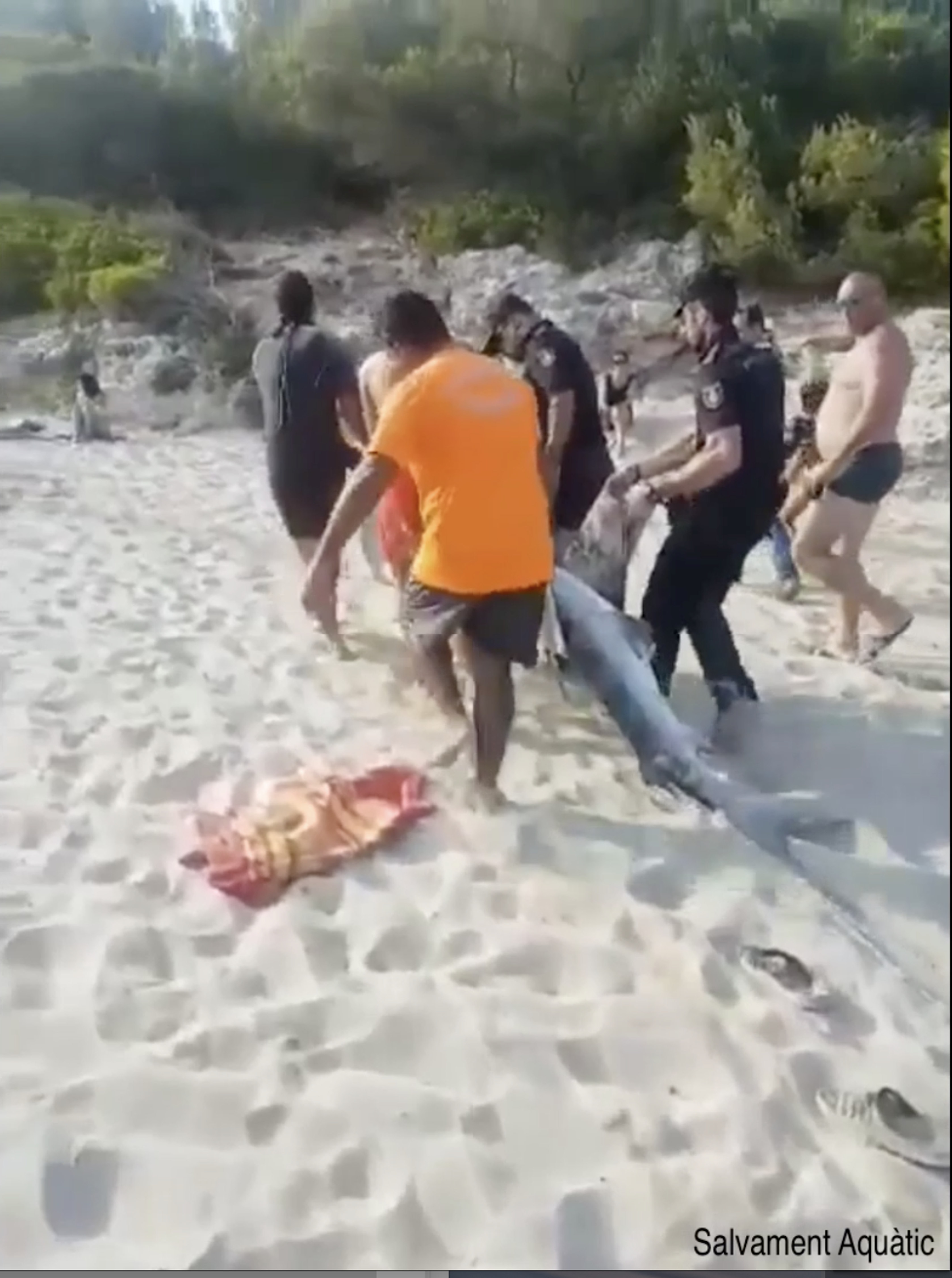 Credit: Salvament Aquàtic Illes Balears