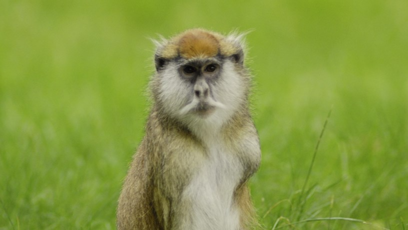 Thirteen Monkeys Dead After Fire Breaks Out At Woburn Safari Park