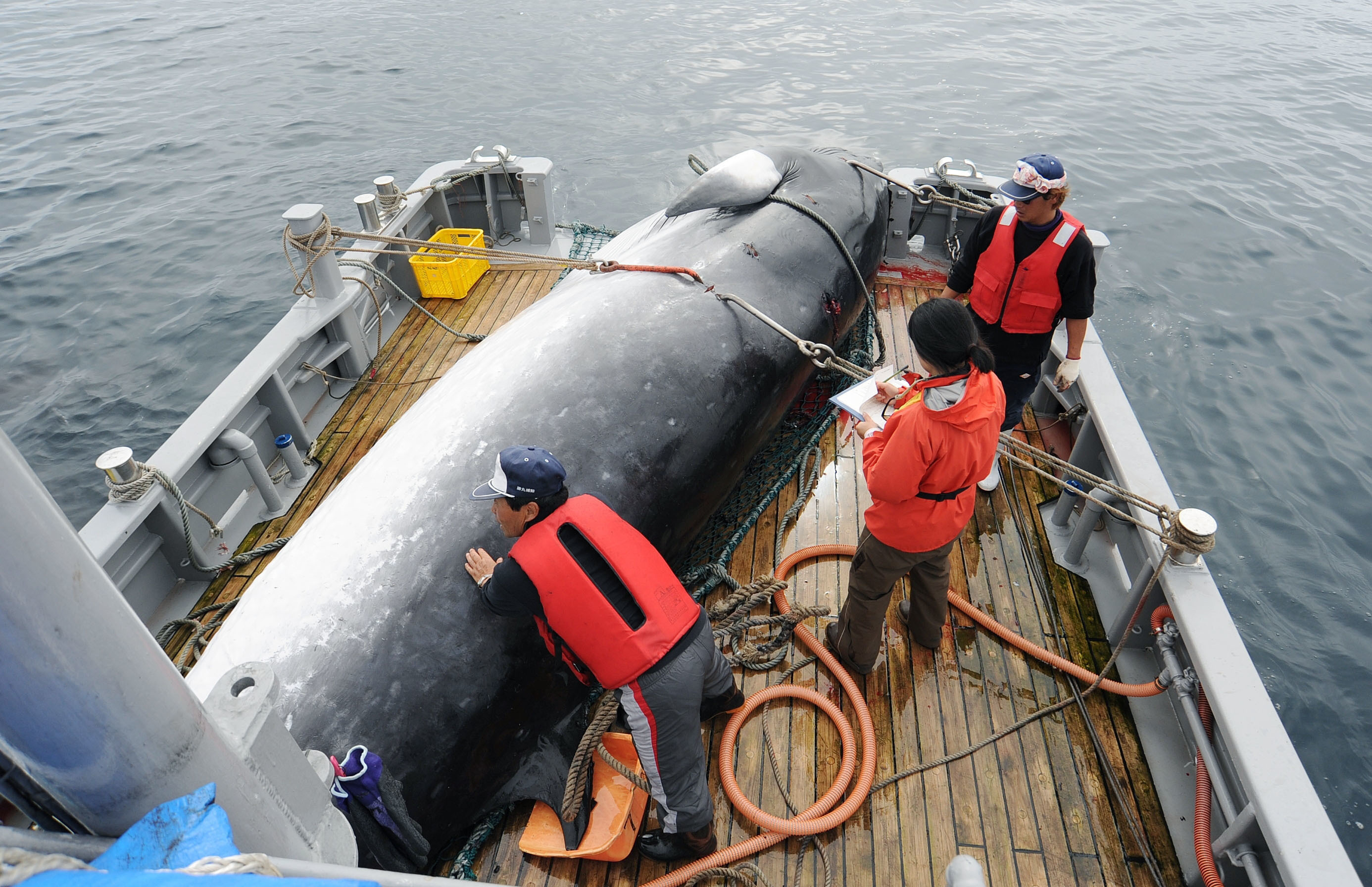 Fishing: Japan bolts whaling commission, but tensions may ease