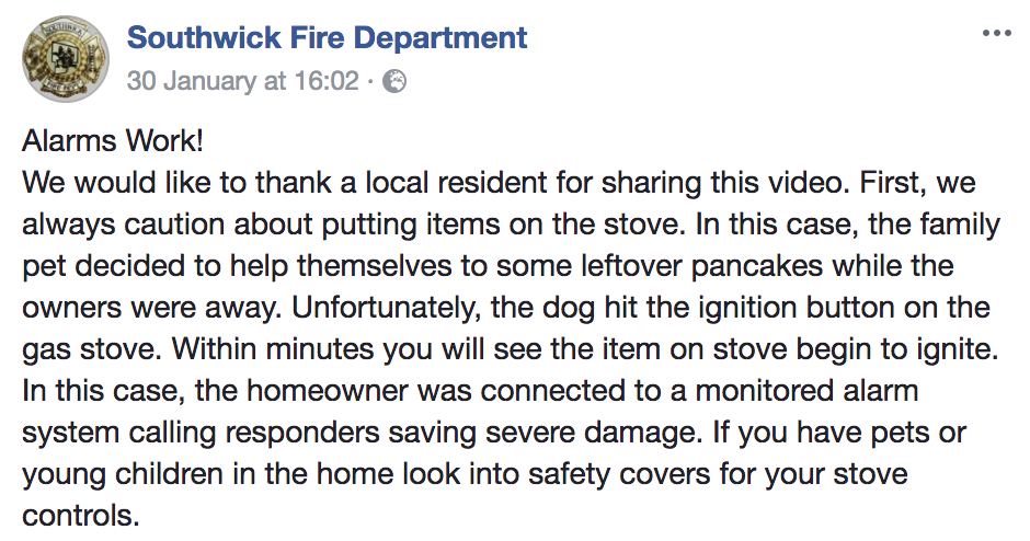 Golden retriever starts house fire while nabbing pancakes from stove