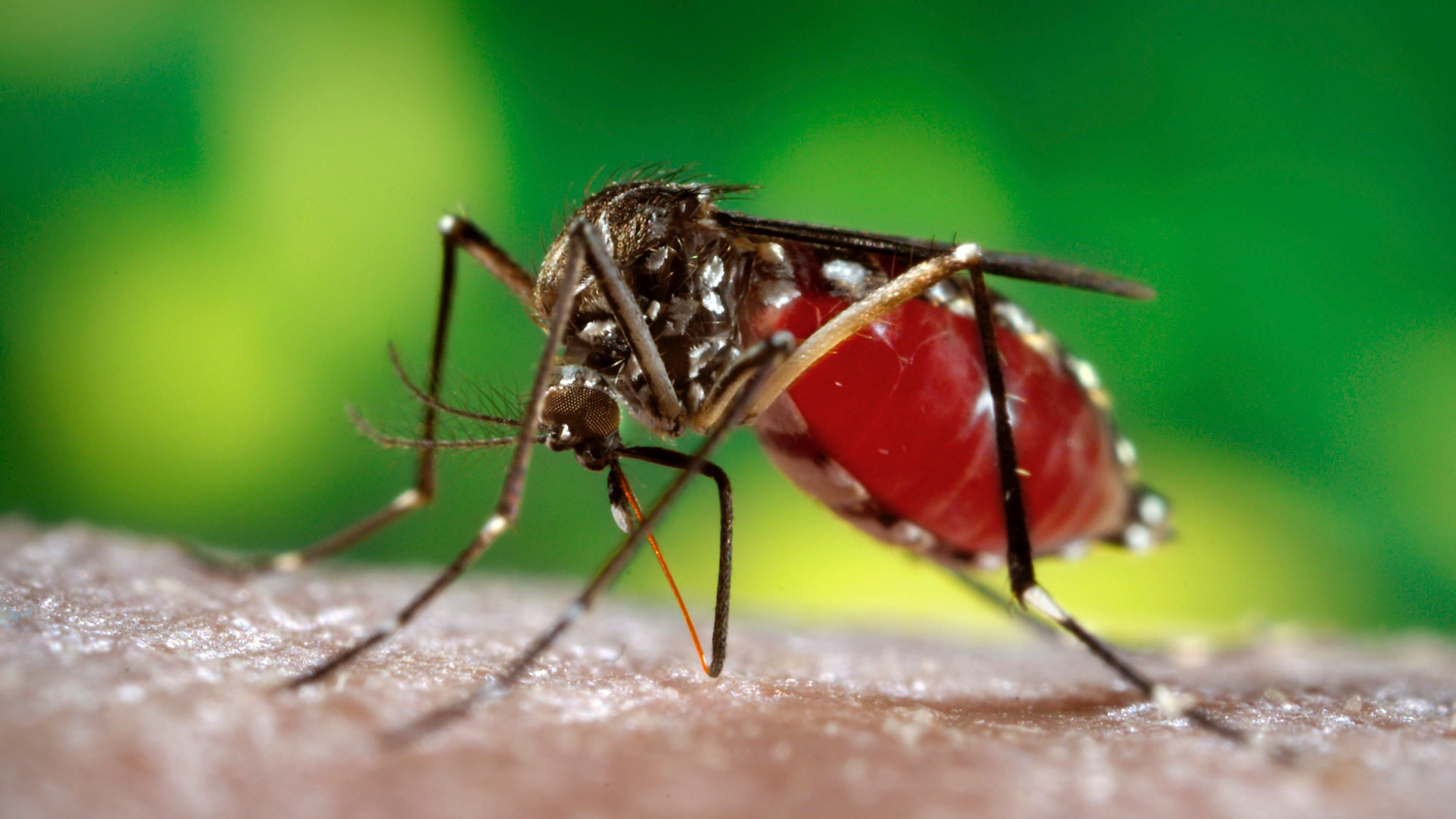 Scientists Discover That Dengue Fever Could Be Transmitted Sexually