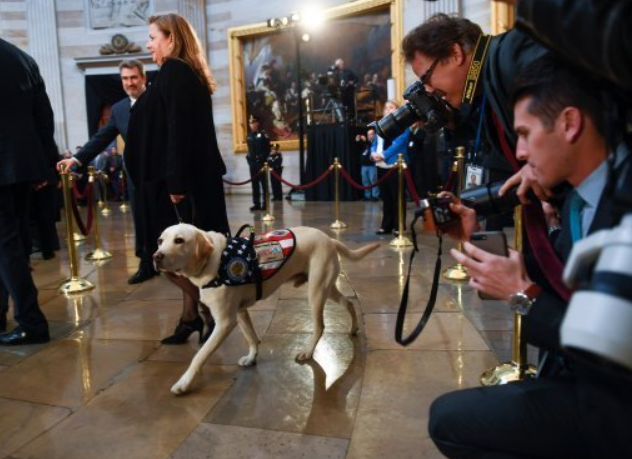 George HW Bush's Service Dog Sully Pays Respects To The Late President. Credit: PA